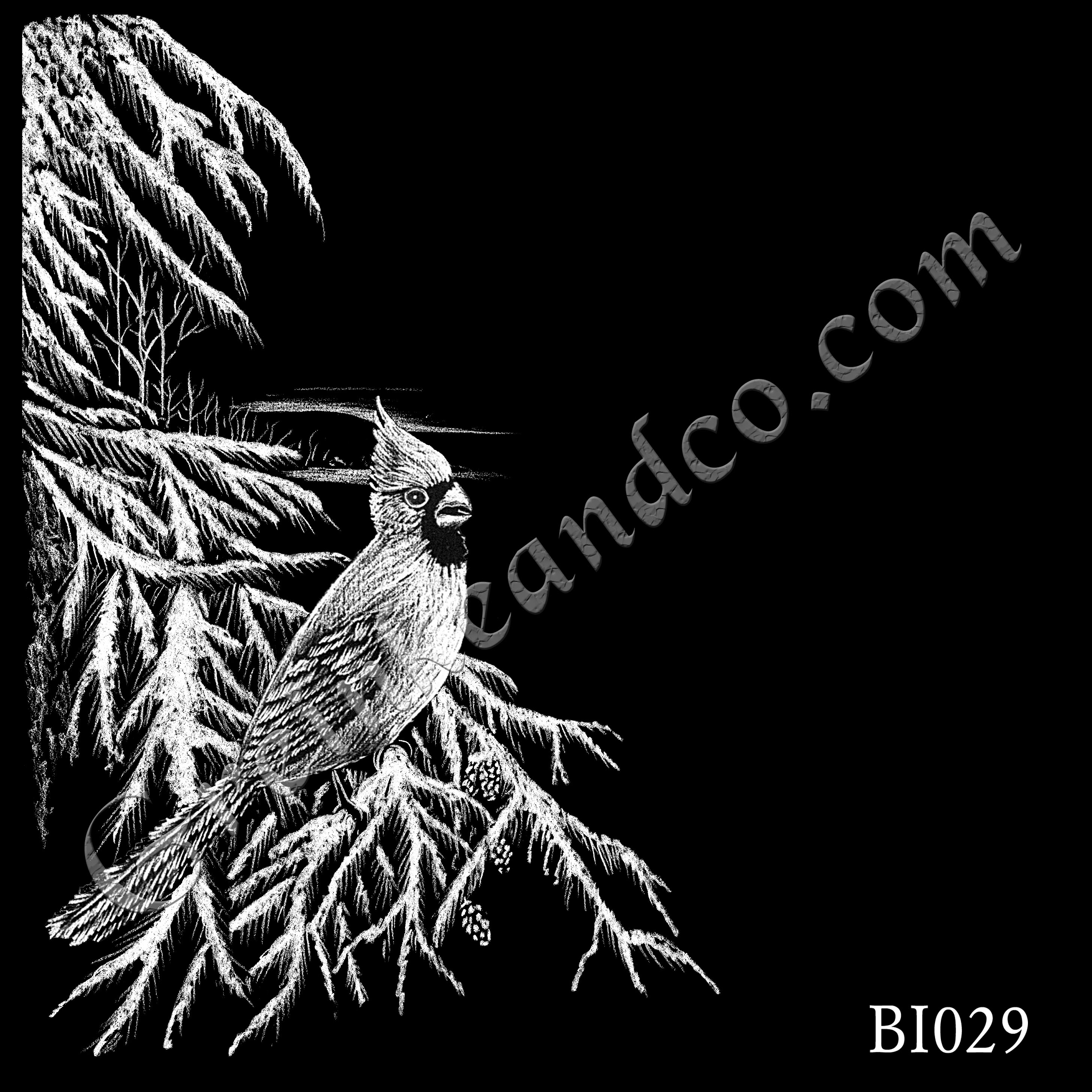 BI029 - Cardinal in Winter