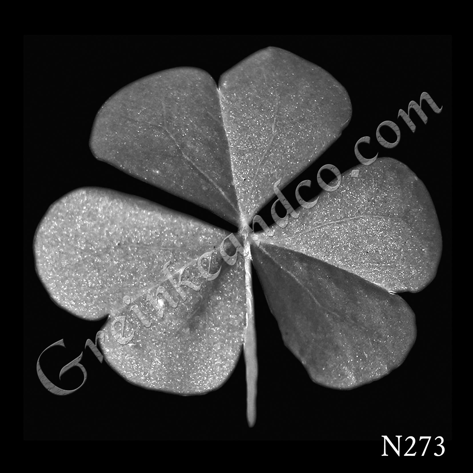 Three leafed clover shamrock