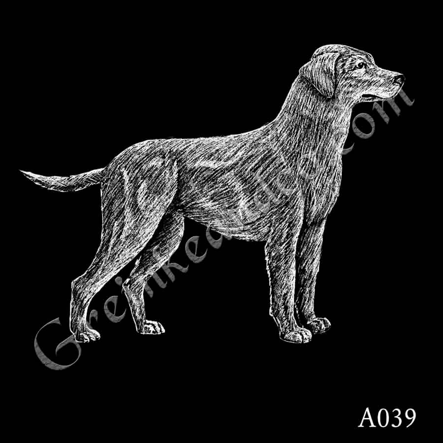 A039 - Yellow Lab