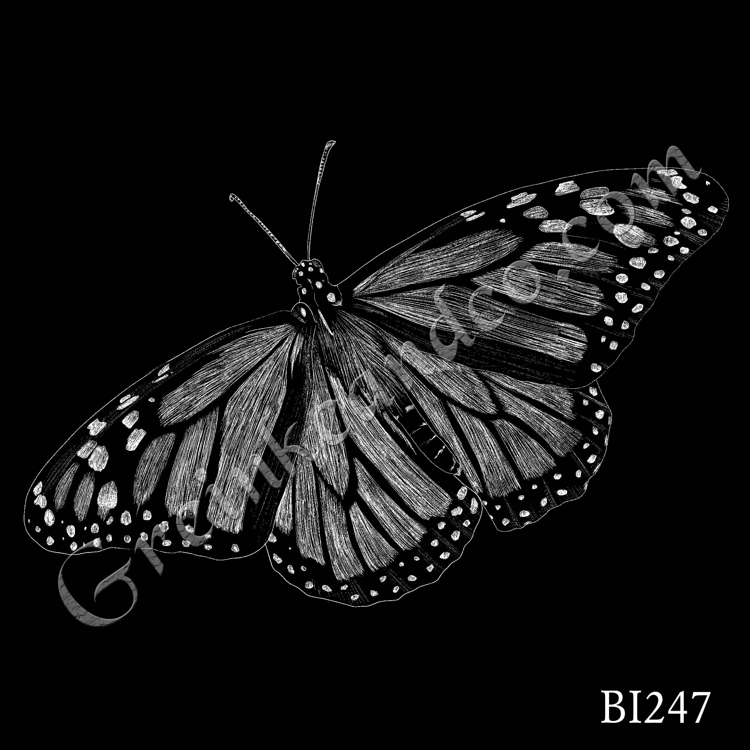 BI247 - Monarch Butterfly