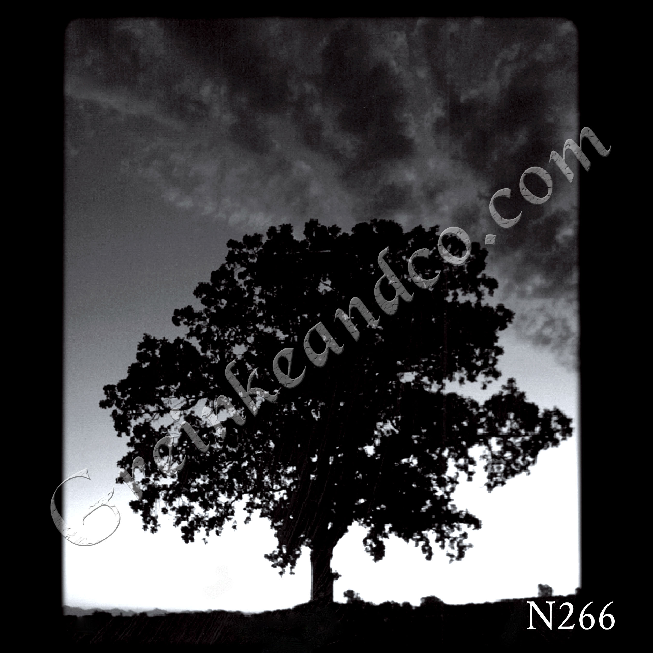 Tree Silhouette photo