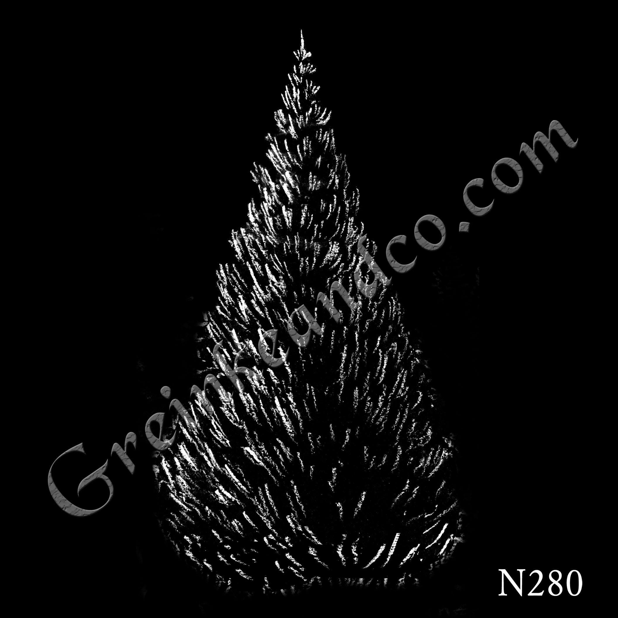 long needle pine tree drawing